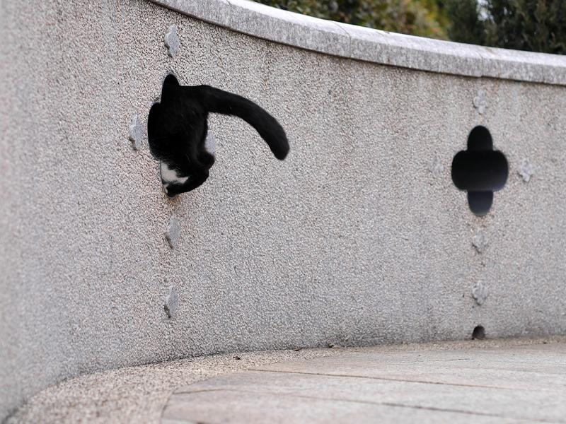 壁の飾り窓と黒白猫7