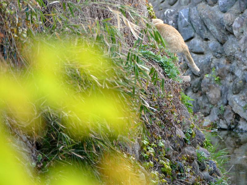 斜面を登る茶白猫4