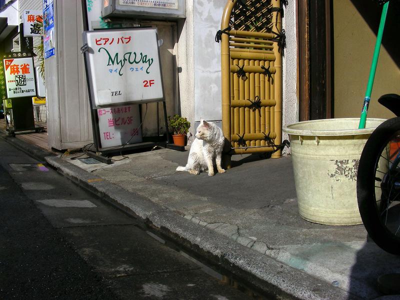 飲み屋街の白猫1