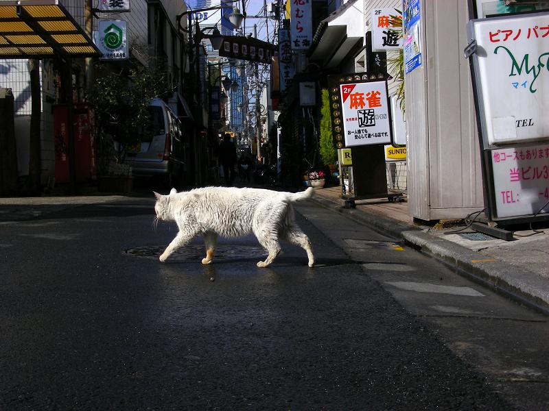 飲み屋街の白猫2