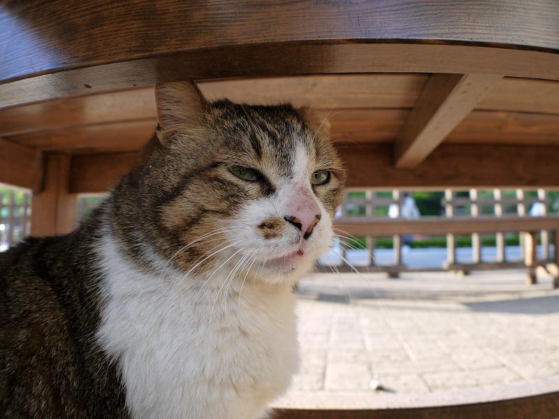 ベンチとキジ白猫2