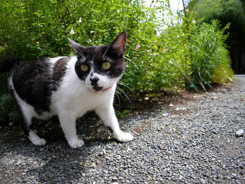 境内で潜り込む白黒猫1