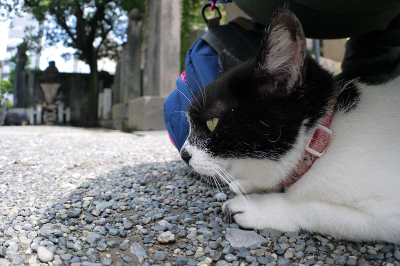 境内で潜り込む白黒猫3