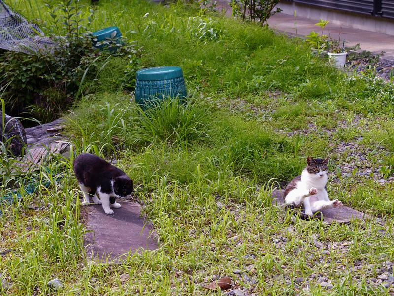 神域草叢の猫2匹1