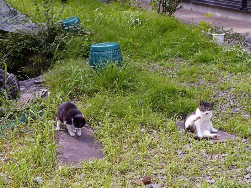 神域草叢の猫2匹2