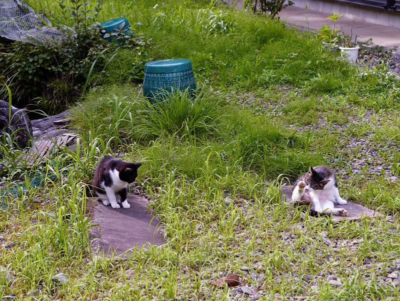 神域草叢の猫2匹3