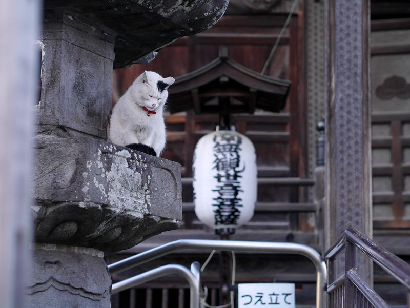 お堂灯籠の白黒猫1