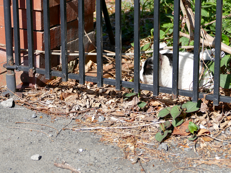 玄関横の白黒猫1