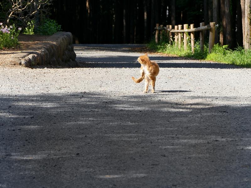 境内を歩いて来た茶白猫1