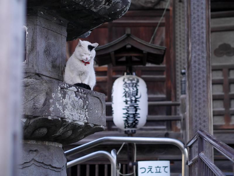お堂灯籠の白黒猫2