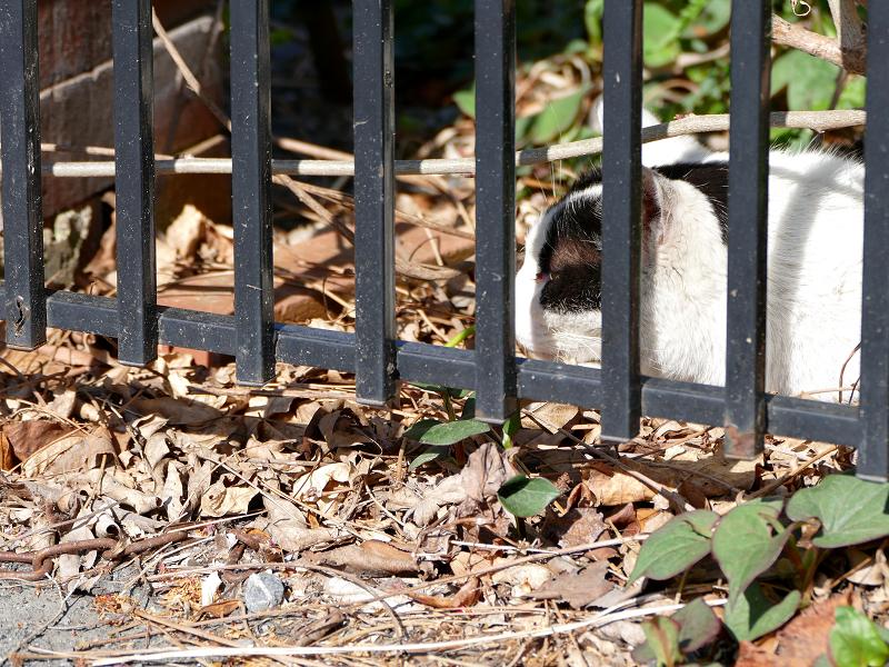 玄関横の白黒猫2