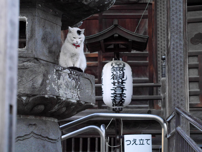 お堂灯籠の白黒猫3