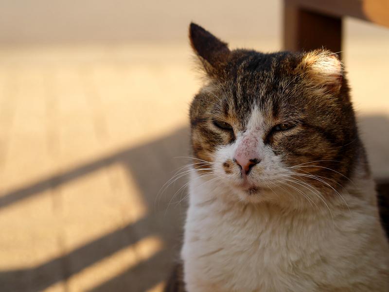 ベンチの影とキジ白猫1