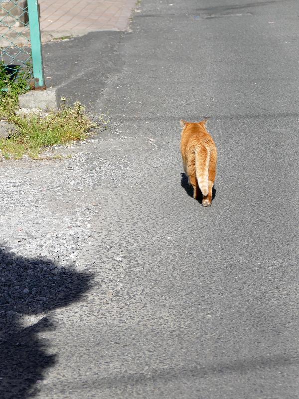 道を歩く茶トラ猫2