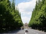 神宮外苑銀杏並木-36D
