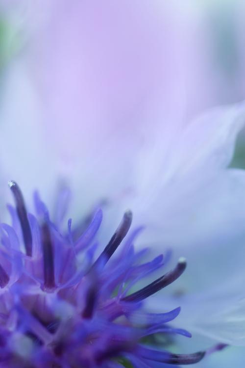 flowers_18_6_12_17.jpg