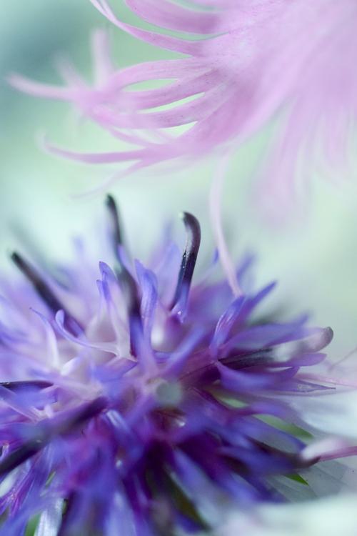 flowers_18_6_12_3.jpg