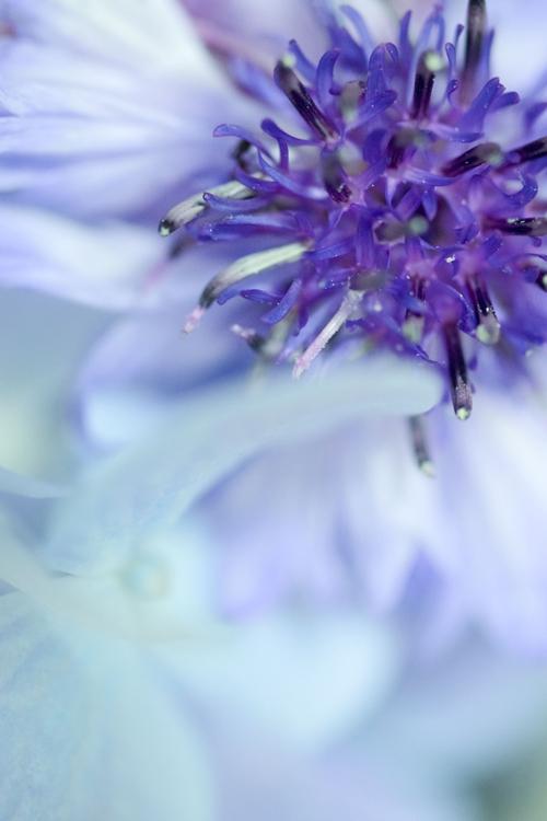 flowers_18_6_12_4.jpg