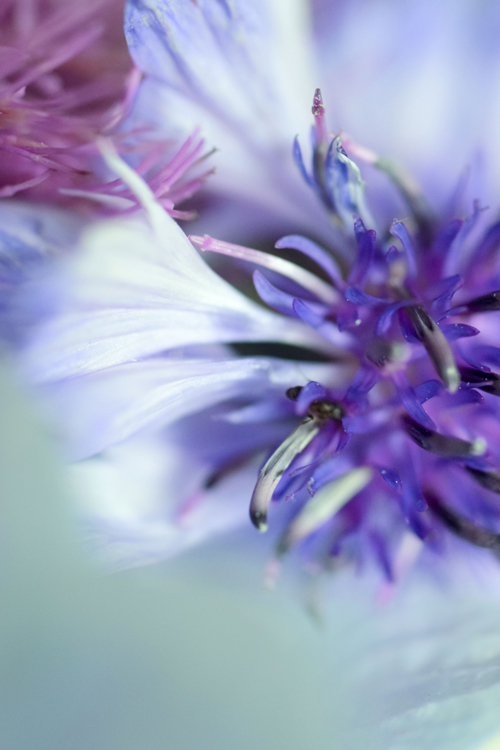 flowers_18_6_12_5.jpg