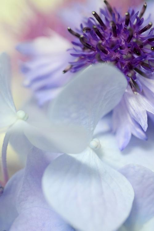 flowers_18_6_12_6.jpg