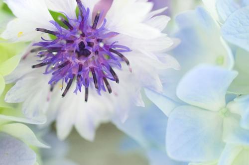 flowers_18_6_12_7.jpg