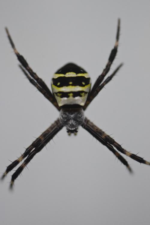 spider_18_6_10_1.jpg