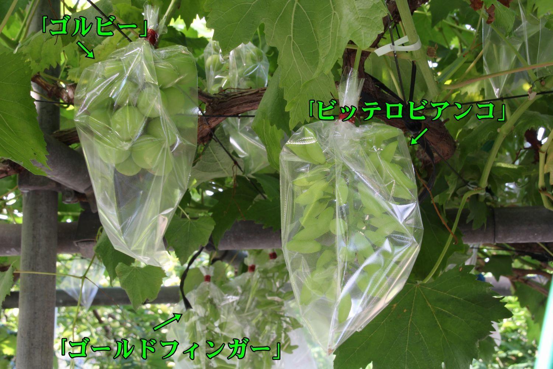 1Gol_Bittero180619_028.jpg