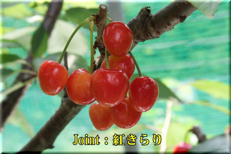 1Joint_kirari180614_005.jpg