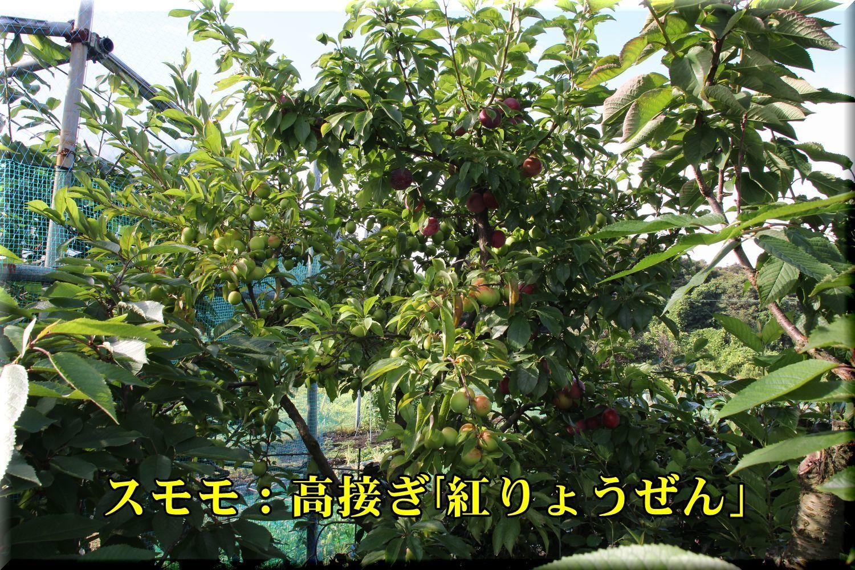 1beniryouzen180619_002.jpg