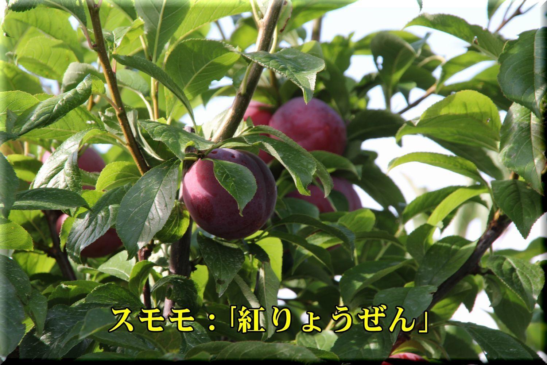 1beniryouzen180619_003.jpg