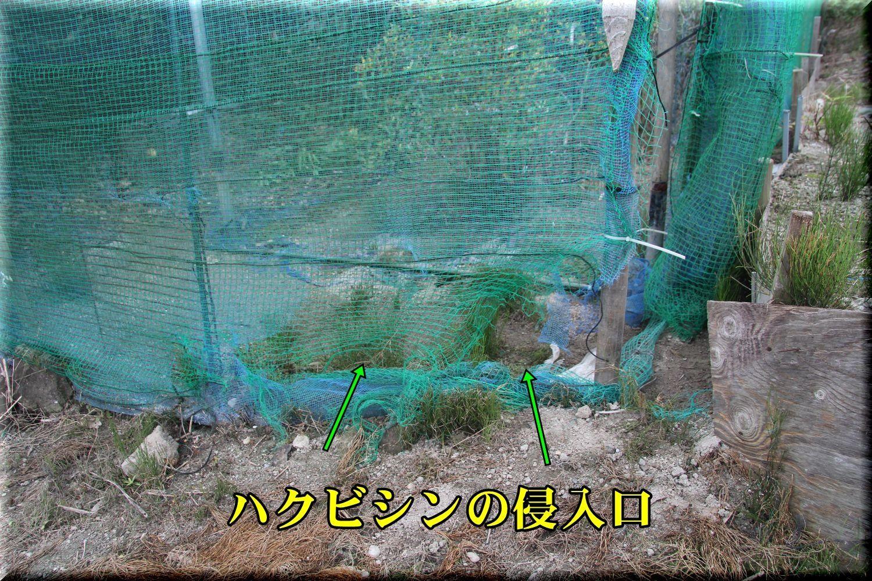 1hakubi180717_002.jpg