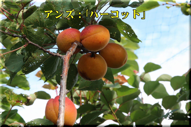 1harcot180619_009.jpg