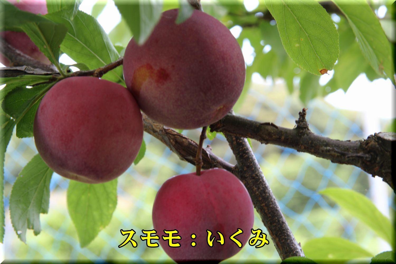 1ikumi180612_001.jpg