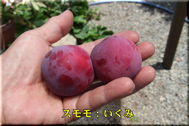 1ikumi180614_030.jpg