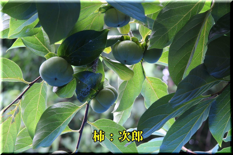 1jirou180716_023.jpg