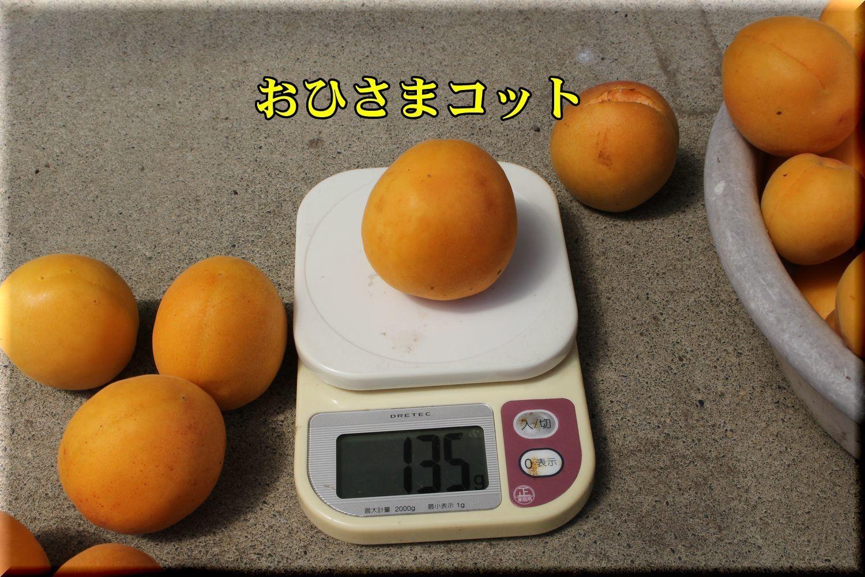 1ohisama180622_059.jpg