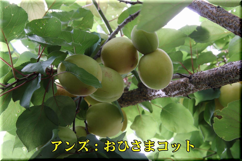 1ohisamacot180612_012.jpg