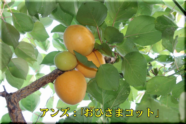 1ohisamacot180619_019.jpg