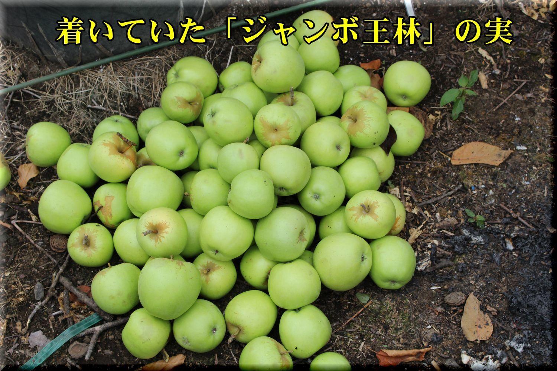 1ourin180801_004.jpg