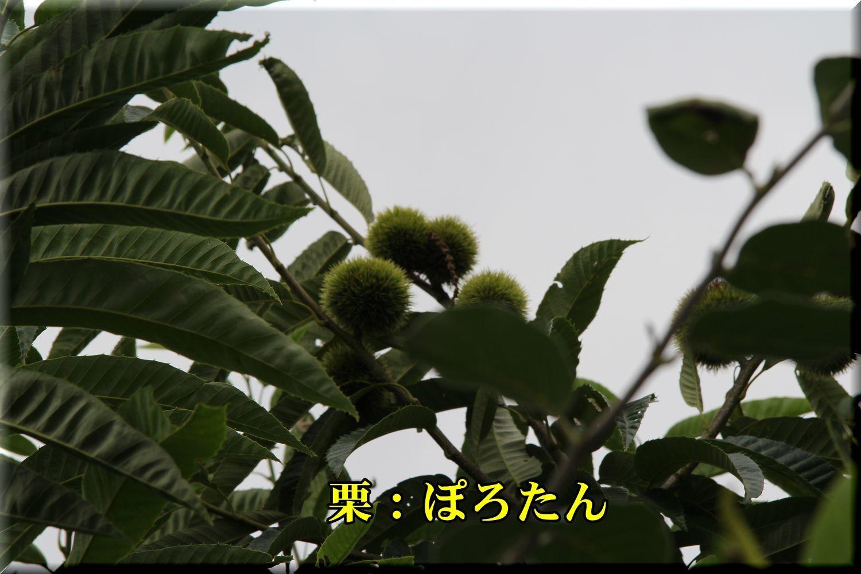 1porotan180716_016.jpg