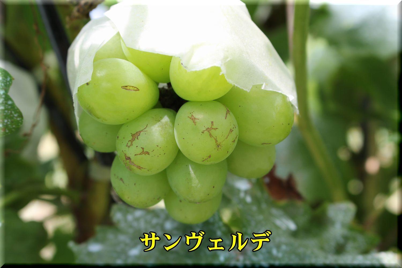 1sanberude180809_004.jpg