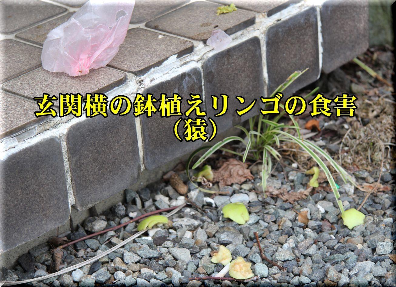 1saru180721.jpg