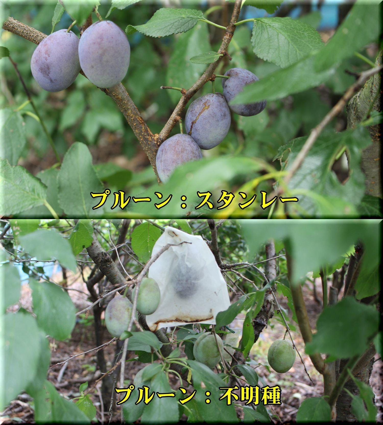 1stan_fumei180806_016.jpg