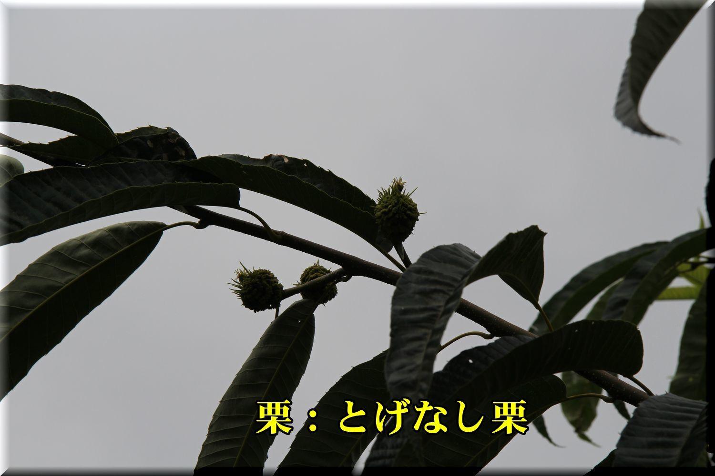 1togenasi180716_008.jpg
