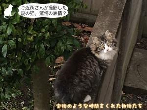 ご近所さんが撮影した謎の猫。驚愕の表情?
