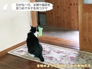 日がな一日、玄関や猫窓を見つめてキチを待つタマ