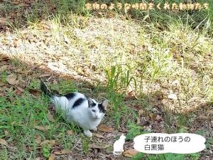 子連れのほうの白黒猫