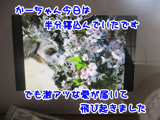 0421-07_2018042116041192c.jpg