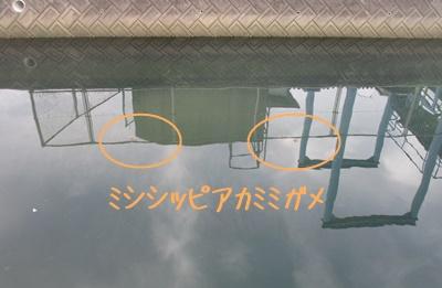 0525-a2.jpg
