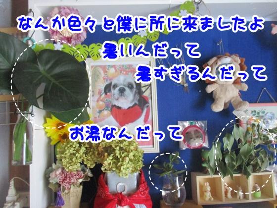 0724-01_2018072414032519f.jpg